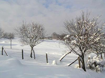 """""""La nieve y la tempestad destruyen las flores,"""
