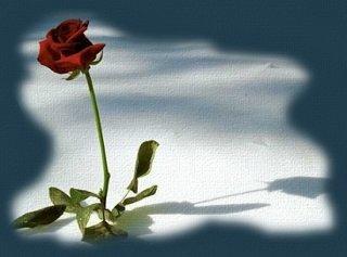 Poemas..y Reflexiones... - Página 3 ROSA